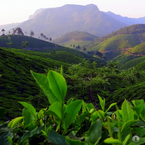 Monsoon Holidays In Kerala: 10 Breathtaking Monsoon Destinations In India. Boutique