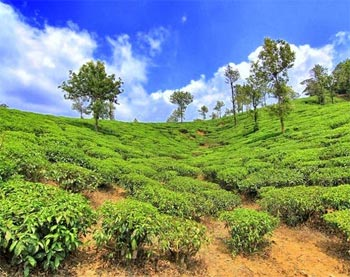 Green Harmony: Explore best tourist destinations in South India
