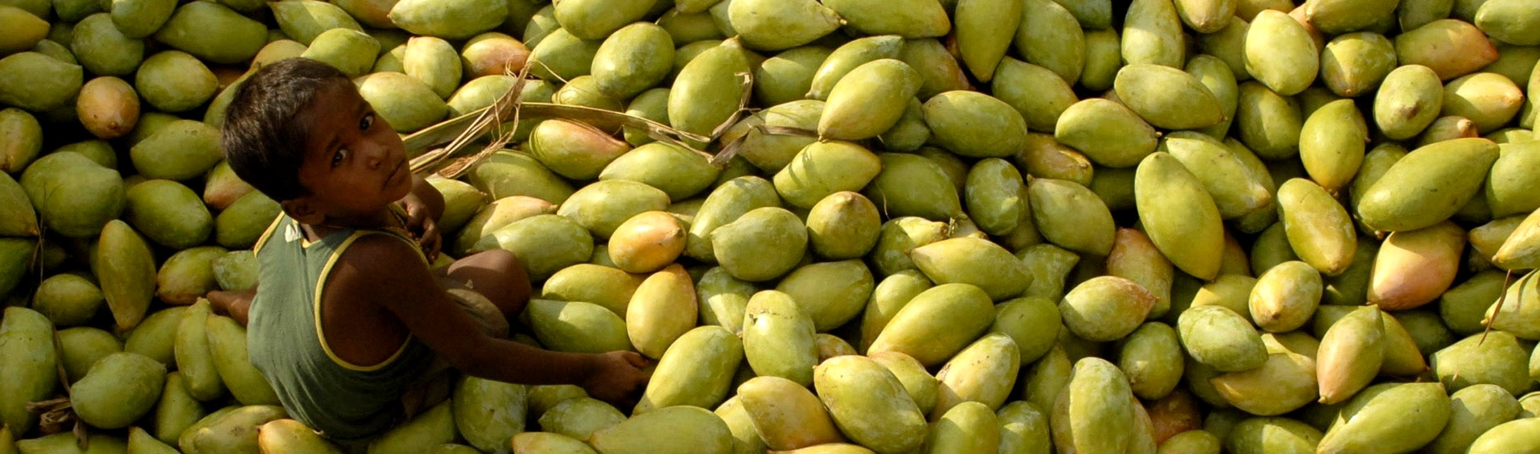 While first time travel in India, consider to eat ennough superfood - mango!