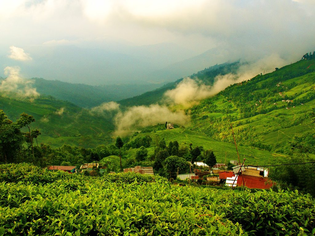 darjeeling-luxury destinations in India-Boutique tour operator in India-trip planner in India-solo travel packages in india-first time travel to india